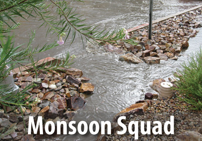 The Monsoon Squad cares for WMG's community rain gardens.