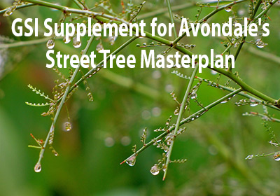 Green Stormwater Infrastructure Supplement for Avondale's Street Tree Master Plan
