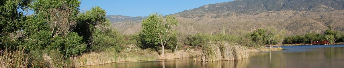 A spring along the Upper Tanque Verde feeds La Cebadilla lake
