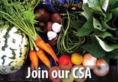 Join our WMG's Sleeping Frog Farms CSA!