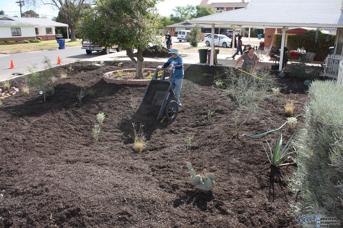 Replacing Your Lawn With Native Plantulch Reduces Water Use And Improves The Watershed