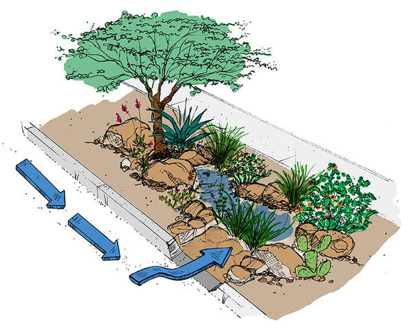 Curb cuts direct stormwater into streetside basins, or rain gardens, providing free irrigation for trees and other vegetation while reducing flooding and stormwater pollution.