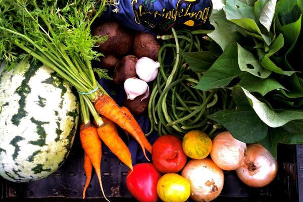 Beautiful bounty of local, organic produce from Sleeping Frog Farms.