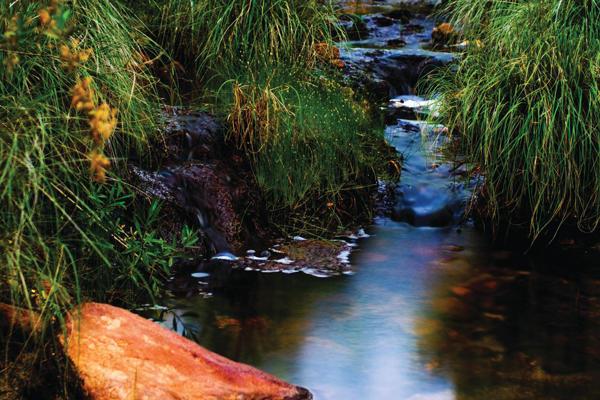 Creek Walks Inspire