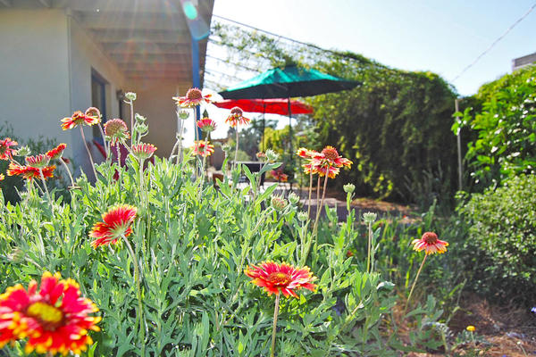 WMG's Living Lab & Learning Center features lush landscapes of native trees and plants.