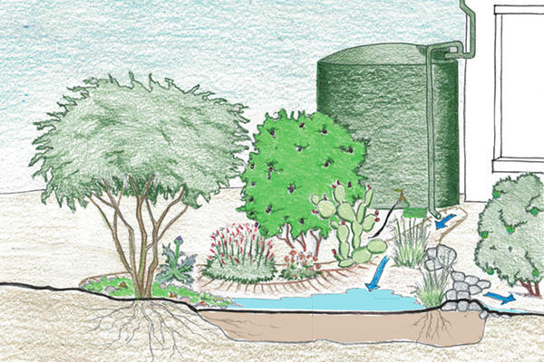 Passive and active rain harvesting.