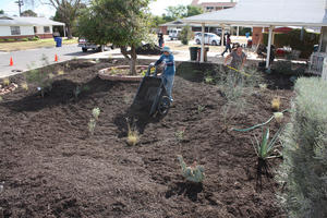 Replacing your lawn with native plants and mulch reduces water use and improves the watershed.