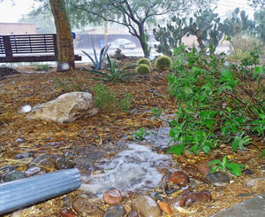 Rain provides a free and abundant source of landscape water.