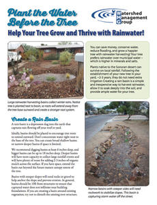 Plant the Water Before the Tree - Help Your Tree Grow and Thrive with Rainwater cover