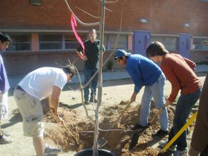 Students plant a tree at Rincon/University High School