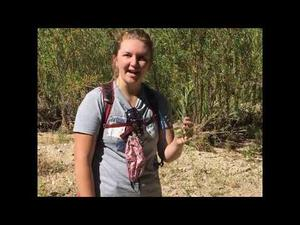 Embedded thumbnail for Tanque Verde Creek Flows in June! Field trip for National Rivers Month