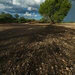 bare-soil-tree-in-background