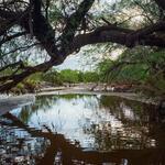 flow-overhanging-tree