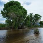 flow-tree