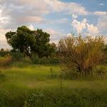field-green