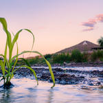New life in the Santa Cruz River. Photo by Julius Schlosburg