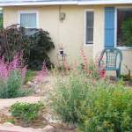 Rain gardens are a great first step in your landscape transformation.