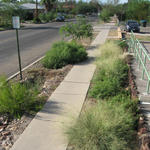 Pollinator plants and native grasses create lush right of way gardens.