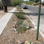 Rain gardens add vegetation and divert rainwater from entering the stormwater waste stream.
