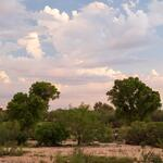sky-pink-trees