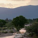 sunset-confluence-flow-tree