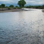 tree-flowing-water