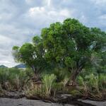tree-sand