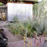 Mead Meir basin in her side yard