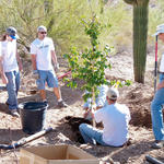 Tree planting demo.