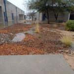 Cienega High School water harvesting project - basins with water during rain