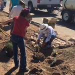 Digging basins and adding plants