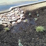 Curb cuts take water from the parking lot to plants in the landscape