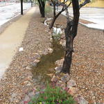 Long swale captures parking lot runoff
