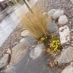 Planted grasses reap rain basin benefits