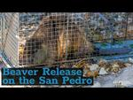 Embedded thumbnail for Beaver Release on the San Pedro