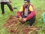 Embedded thumbnail for WMG Founders' Field Blog #3: Vetiver grass